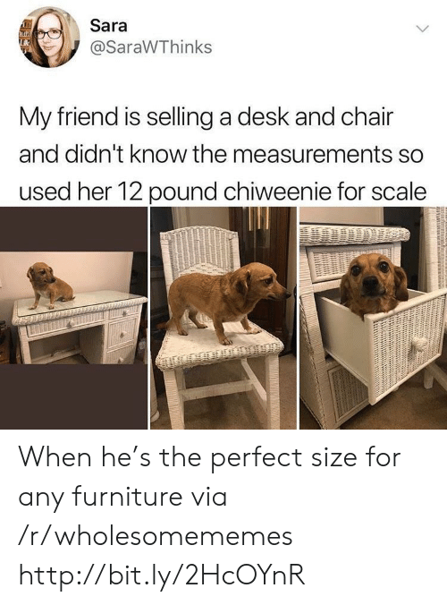 For Scale: Sara  @SaraWThinks  My friend is selling a desk and chair  and didn't know the measurements so  used her 12 pound chiweenie for scale When he's the perfect size for any furniture via /r/wholesomememes http://bit.ly/2HcOYnR