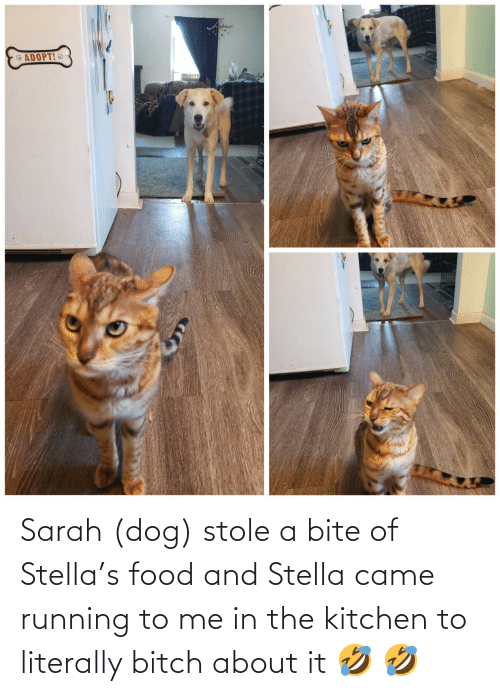 The Kitchen: Sarah (dog) stole a bite of Stella's food and Stella came running to me in the kitchen to literally bitch about it 🤣 🤣