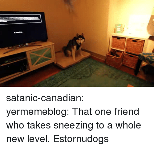 Gif, Tumblr, and Blog: satanic-canadian: yermemeblog: That one friend who takes sneezing to a whole new level.   Estornudogs