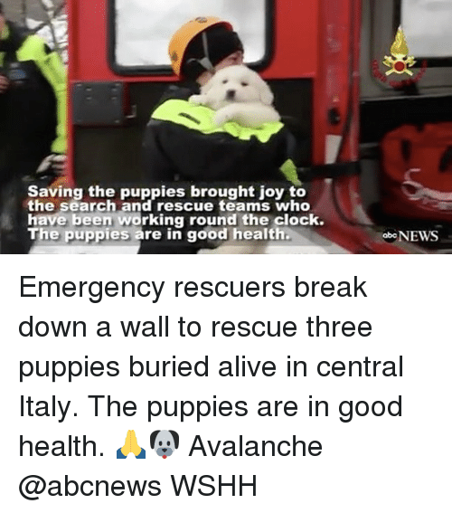 avalanche: Saving the puppies brought joy to  the search and rescue teams who  have been working round the clock.  The puppies are in good health.  oboNEWS Emergency rescuers break down a wall to rescue three puppies buried alive in central Italy. The puppies are in good health. 🙏🐶 Avalanche @abcnews WSHH