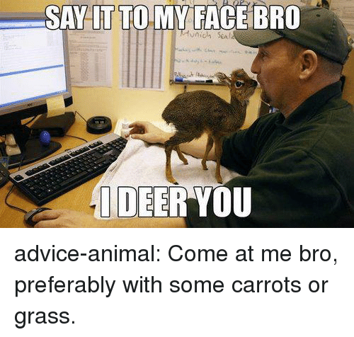 come at me: SAY LT TO MY FACE BRO  DEER YOU advice-animal:  Come at me bro, preferably with some carrots or grass.