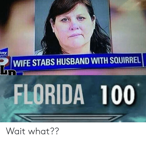 Florida, Squirrel, and Husband: Say  WIFE STABS HUSBAND WITH SQUIRREL  FLORIDA 100 Wait what??