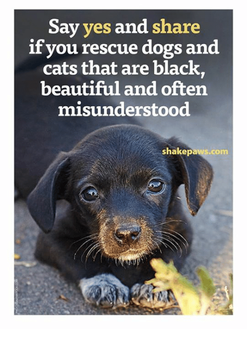 dog-and-cats: Say yes  and share  if you rescue dogs and  cats that are black,  beautiful and often  misunderstood  shakepaws.com
