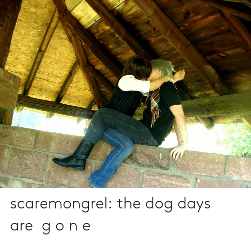 Target, Tumblr, and Blog: scaremongrel:  the dog days are  g o n e
