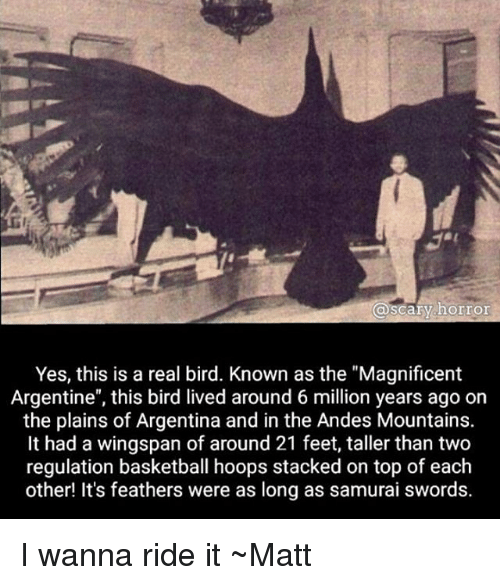 "argentine: @scary horror  Yes, this is a real bird. Known as the ""Magnificent  Argentine"", this bird lived around 6 million years ago on  the plains of Argentina and in the Andes Mountains.  It had a wingspan of around 21 feet, taller than two  regulation basketball hoops stacked on top of each  other! It's feathers were as long as samurai swords. I wanna ride it ~Matt"