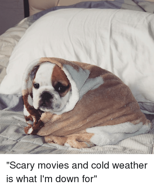 "scari movie: ""Scary movies and cold weather is what I'm down for"""