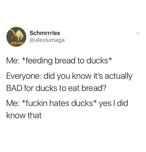 yes i did: Schmrrrlex  @alexlumaga  NEVER FORG  Me: *feeding bread to ducks*  Everyone: did you know it's actually  BAD for ducks to eat bread?  Me: *fuckin hates ducks* yes I did  know that