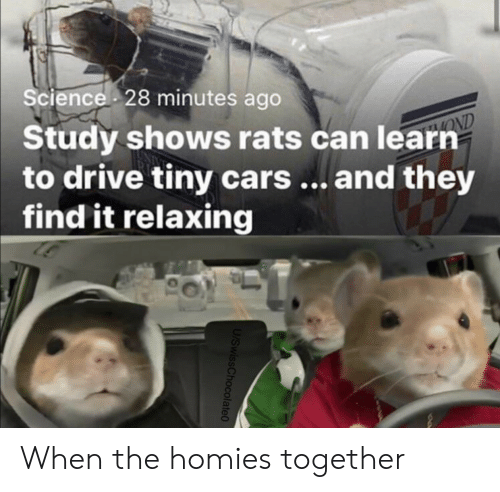 relaxing: Science 28 minutes ago  Study shows rats can learn  to drive tiny cars... and they  find it relaxing  OND  U/SwissChocolate0 When the homies together