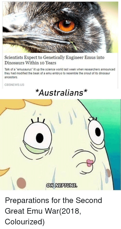 """emu: Scientists Expect to Genetically Engineer Emus into  Dinosaurs Within 10 Years  Talk of a """"emusaurus"""" lit up the science world last week when researchers announced  they had modified the beak of a emu embryo to resemble the snout of its dinosaur  ancestors.  CBSNEWS.US  *Australians*  OHINEPTUNE Preparations for the Second Great Emu War(2018, Colourized)"""