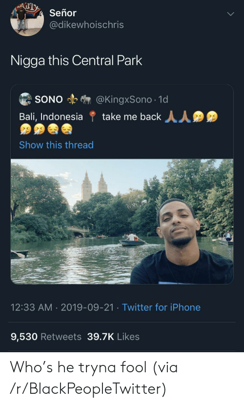 Blackpeopletwitter, Iphone, and Twitter: Señor  @dikewhoischris  Nigga this Central Park  @KingxSono 1d  take me back  SONO  Bali, Indonesia  Show this thread  12:33 AM 2019-09-21. Twitter for iPhone  9,530 Retweets 39.7K Likes Who's he tryna fool (via /r/BlackPeopleTwitter)