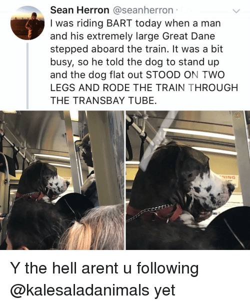 Memes, Bart, and Today: Sean Herron @seanherron  I was riding BART today when a man  and his extremely large Great Dane  stepped aboard the train. It was a bit  busy, so he told the dog to stand up  and the dog flat out STOOD ON TWO  LEGS AND RODE THE TRAIN THROUGH  THE TRANSBAY TUBE.  NING Y the hell arent u following @kalesaladanimals yet