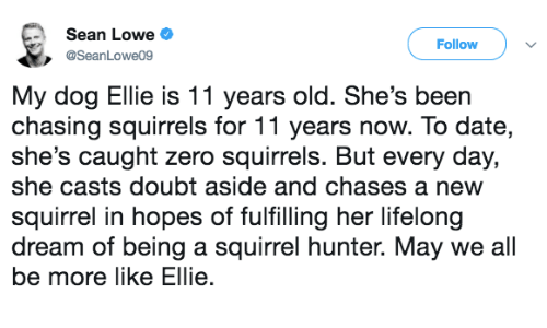 squirrels: Sean Lowe  Follow  @SeanLowe09  My dog Ellie is 11 years old. She's been  chasing squirrels for 11 years now. To date,  she's caught zero squirrels. But every day,  she casts doubt aside and chases a new  squirrel in hopes of fulfilling her lifelong  dream of being a squirrel hunter. May we all  be more like Ellie.