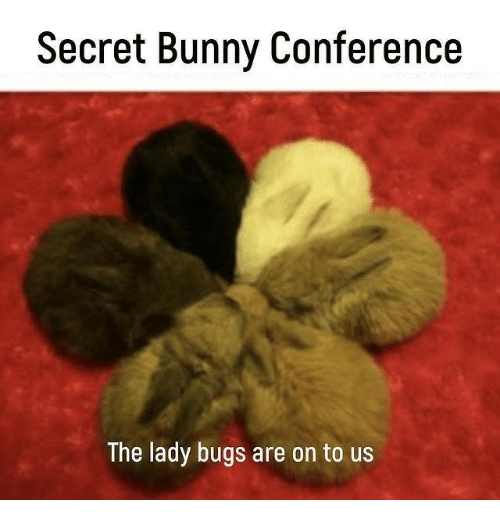 Secret, Bunny, and Lady: Secret Bunny Conference  The lady bugs are on to us