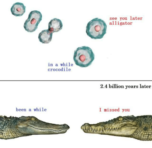 Been A While: see you later  alligator  in a while  crocodile  2.4 billion years later  I missed you  been a while