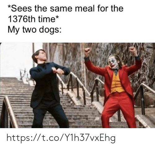 Dogs, Memes, and Time: *Sees the same meal for the  1376th time*  My two dogs: https://t.co/Y1h37vxEhg