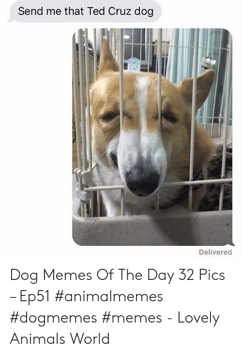 Cruz: Send me that Ted Cruz dog  Delivered Dog Memes Of The Day 32 Pics – Ep51 #animalmemes #dogmemes #memes - Lovely Animals World