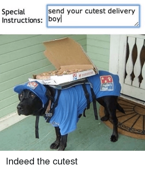 Indeed, Delivery, and Cutest: send your cutest delivery  Special  Instructions: boyl Indeed the cutest