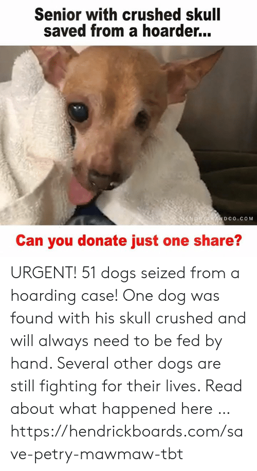 Dogs, Memes, and Tbt: Senior with crushed skull  saved from a hoarder...  DCO. COM  Can you donate just one share? URGENT! 51 dogs seized from a hoarding case! One dog was found with his skull crushed and will always need to be fed by hand. Several other dogs are still fighting for their lives. Read about what happened here … https://hendrickboards.com/save-petry-mawmaw-tbt