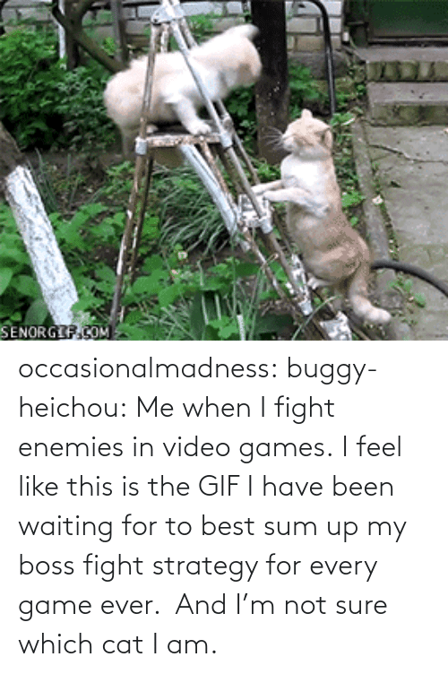 Sum Up: SENORGIF.COM occasionalmadness:  buggy-heichou:  Me when I fight enemies in video games.  I feel like this is the GIF I have been waiting for to best sum up my boss fight strategy for every game ever. And I'm not sure which cat I am.
