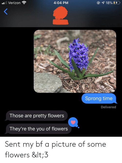 Flowers: Sent my bf a picture of some flowers <3