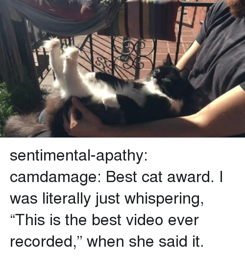 """Target, Tumblr, and Apathy: sentimental-apathy:  camdamage: Best cat award.  I was literally just whispering, """"This is the best video ever recorded,"""" when she said it."""