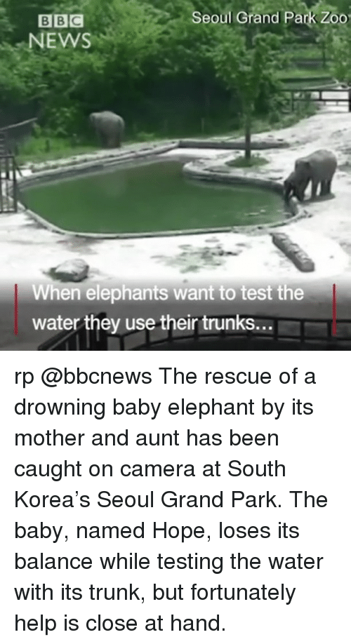 Trunking: Seoul Grand Park Zoo  BBC  NEWS  When elephants want to test the  water they usetheir trunks... rp @bbcnews The rescue of a drowning baby elephant by its mother and aunt has been caught on camera at South Korea's Seoul Grand Park. The baby, named Hope, loses its balance while testing the water with its trunk, but fortunately help is close at hand.