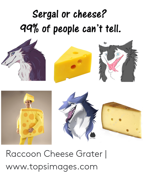 🅱️ 25+ Best Memes About Raccoon Cheese Grater | Raccoon Cheese