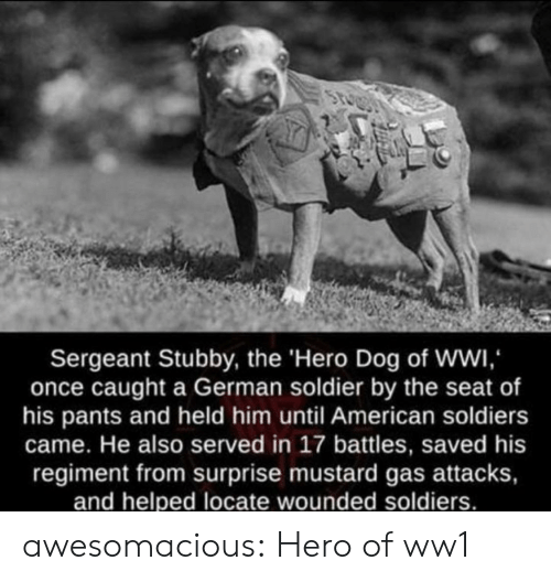 Soldiers: Sergeant Stubby, the 'Hero Dog of WWI,  once caught a German soldier by the seat of  his pants and held him until American soldiers  came. He also served in 17 battles, saved his  regiment from surprise mustard gas attacks,  and helped locate wounded soldiers. awesomacious:  Hero of ww1