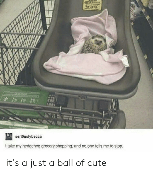 Hedgehog: seriouslybecca  Itake my hedgehog grocery shopping, and no one tells me to stop. it's a just a ball of cute