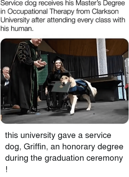 Masters, Dog, and Human: Service dog receives his Master's Degree  in Occupational Therapy from Clarksorn  University after attending every class with  his human this university gave a service dog, Griffin, an honorary degree during the graduation ceremony !