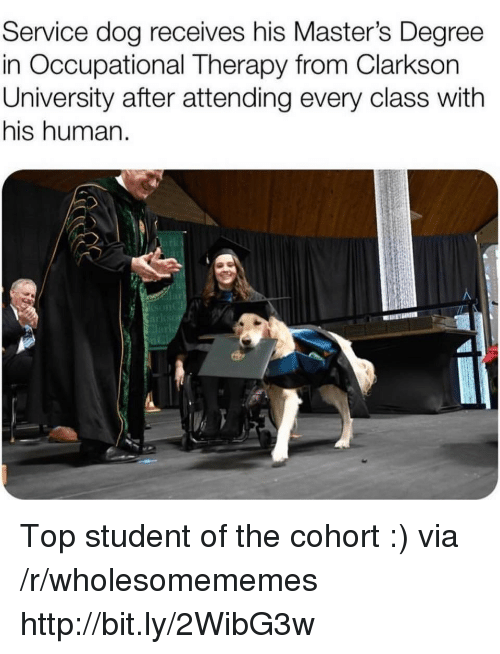 Degree In: Service dog receives his Master's Degree  in Occupational Therapy from Clarkson  University after attending every class with  his human.  lar Top student of the cohort :) via /r/wholesomememes http://bit.ly/2WibG3w