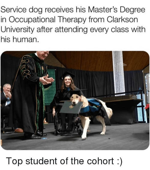 Degree In: Service dog receives his Master's Degree  in Occupational Therapy from Clarkson  University after attending every class with  his human.  lar Top student of the cohort :)