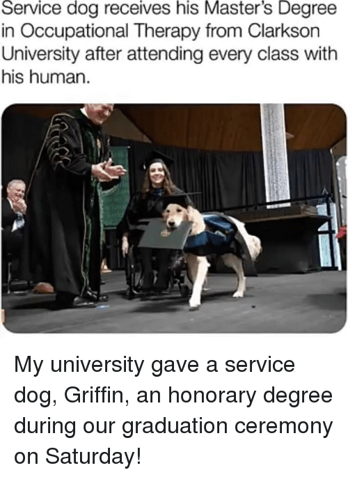 Masters, Dog, and Human: Service dog receives his Master's Degree  in Occupational Therapy from Clarksorn  University after attending every class with  his human My university gave a service dog, Griffin, an honorary degree during our graduation ceremony on Saturday!