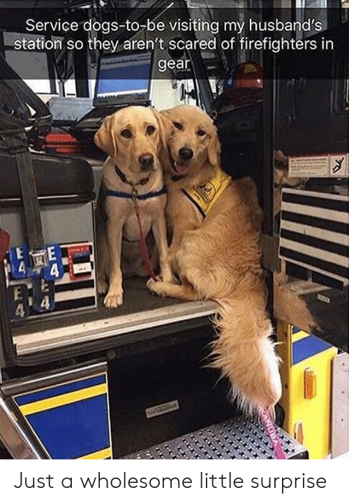 firefighters: Service dogs-to-be visiting my husband's  station so they aren't scared of firefighters in  gear Just a wholesome little surprise