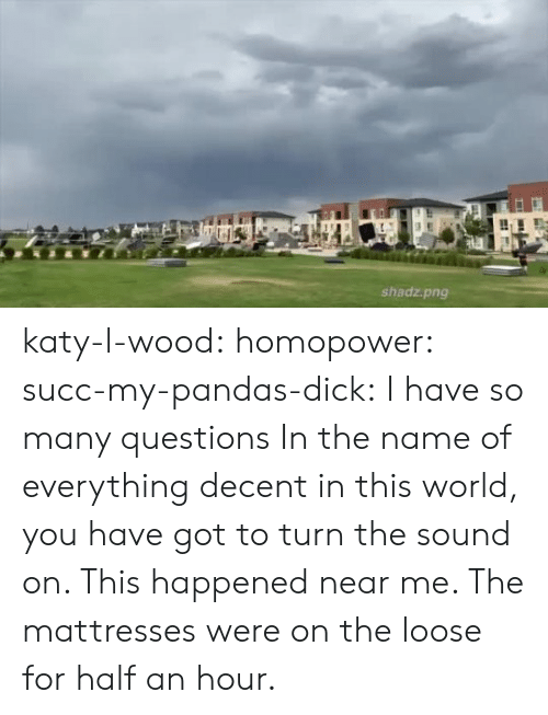 pandas: shadz.png katy-l-wood: homopower:  succ-my-pandas-dick:  I have so many questions   In the name of everything decent in this world, you have got to turn the sound on.   This happened near me. The mattresses were on the loose for half an hour.