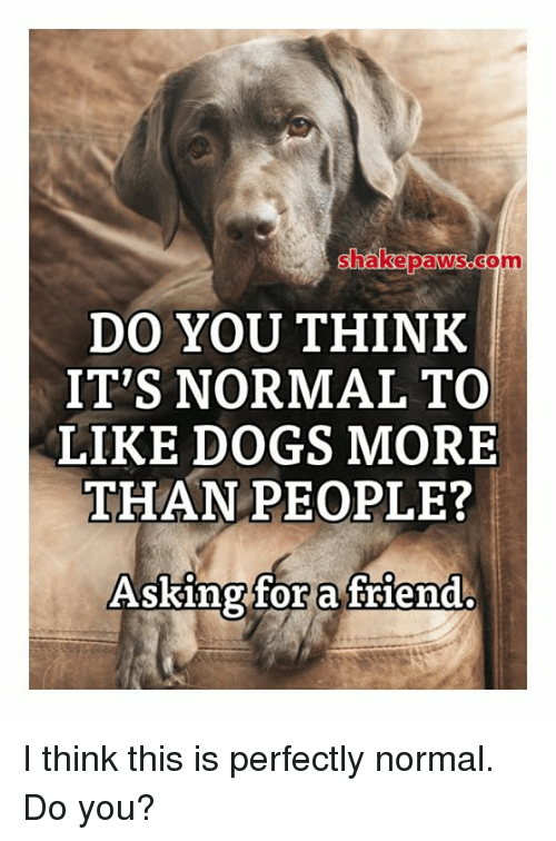Dogs, Memes, and 🤖: shakepaws.com  DO YOU THINK  IT'S NORMAL TO  LIKE DOGS MORE  THANPEOPLE?  ASKingfor a flend I think this is perfectly normal. Do you?