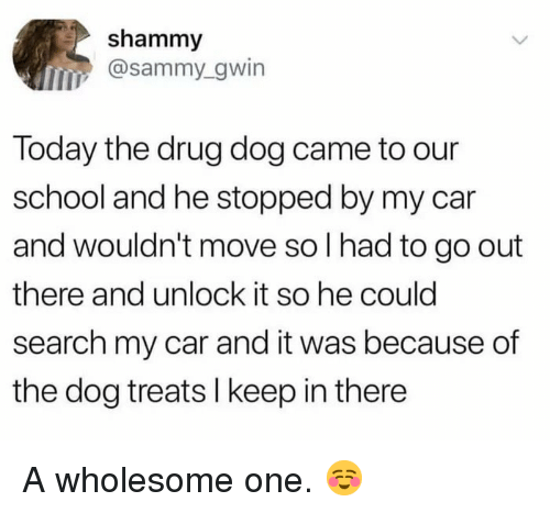 sammy: shammy  @sammy_gwin  Today the drug dog came to our  school and he stopped by my car  and wouldn't move so l had to go out  there and unlock it so he could  search my car and it was because of  the dog treats I keep in there A wholesome one. ☺️
