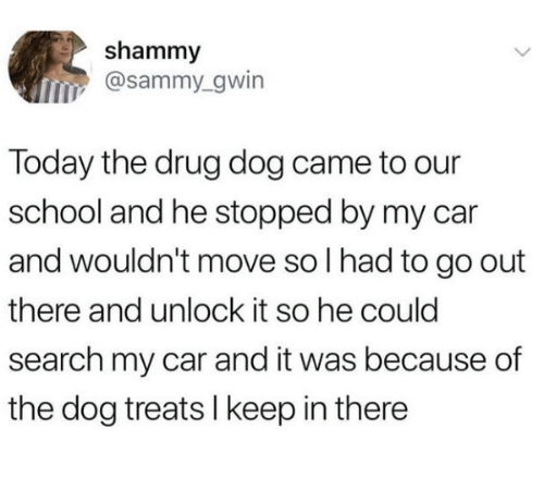 sammy: shammy  @sammy_gwin  Today the drug dog came to our  school and he stopped by my car  and wouldn't move so I had to go out  there and unlock it so he could  search my car and it was because of  the dog treats l keep in there
