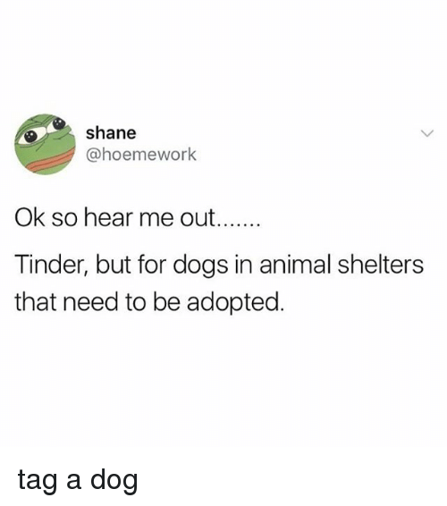 Dogs, Tinder, and Tumblr: shane  @hoemework  Tinder, but for dogs in animal shelters  that need to be adopted tag a dog