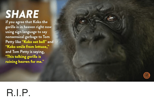 "tom petty: SHARE  if you agree that Koko the  gorilla is in heaven right now  using sign language to say  nonsensical garbage to Tom  Petty like ""Koko eat ball"" and  ""Koko smile from lettuce,""  and Tom Petty is saying,  ""This talking gorilla is  ruining heaven for me."" R.I.P."