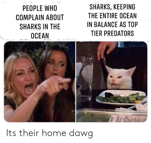 Home, Ocean, and Sharks: SHARKS, KEEPING  PEOPLE WHO  THE ENTIRE OCEAN  COMPLAIN ABOUT  IN BALANCE AS TOP  SHARKS IN THE  TIER PREDATORS  OCEAN Its their home dawg