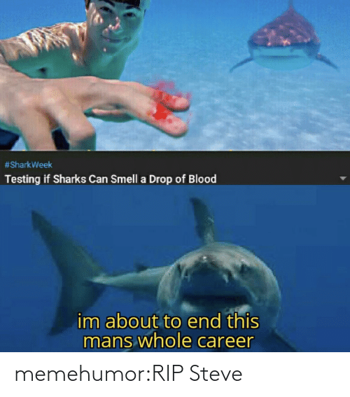 drop:  #SharkWeek  Testing if Sharks Can Smell a Drop of Blood  im about to end this  mans whole career memehumor:RIP Steve