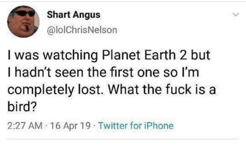 Dank, Iphone, and Twitter: Shart Angus  @lolChrisNelson  I was watching Planet Earth 2 but  I hadn't seen the first one so I'm  completely lost. What the fuck is a  bird?  2:27 AM 16 Apr 19 Twitter for iPhone