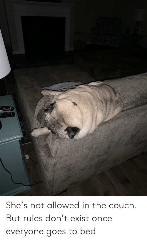 Couch: She's not allowed in the couch. But rules don't exist once everyone goes to bed