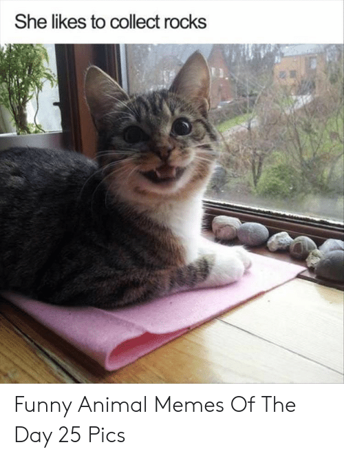 Funny, Memes, and Animal: She likes to collect rocks Funny Animal Memes Of The Day 25 Pics