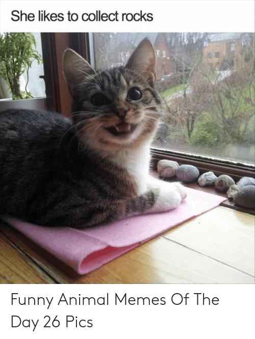 funny animal memes: She likes to collect rocks Funny Animal Memes Of The Day 26 Pics