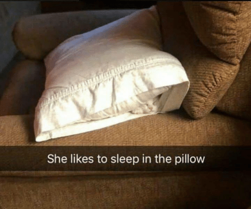 Memes, Sleep, and 🤖: She likes to sleep in the pillow