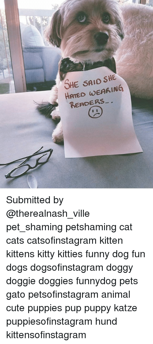 ville: SHE SAIO SHE  HATED WEAKING  RERDERS Submitted by @therealnash_ville pet_shaming petshaming cat cats catsofinstagram kitten kittens kitty kitties funny dog fun dogs dogsofinstagram doggy doggie doggies funnydog pets gato petsofinstagram animal cute puppies pup puppy katze puppiesofinstagram hund kittensofinstagram