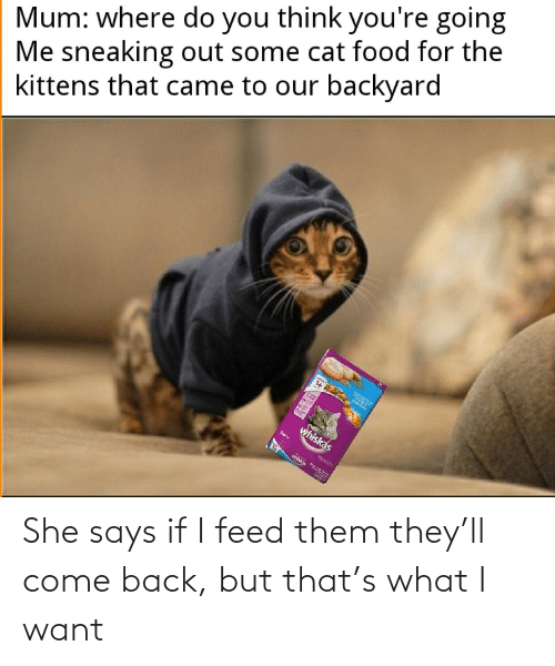 Feed: She says if I feed them they'll come back, but that's what I want