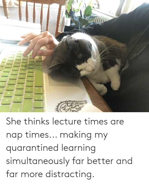 Distracting: She thinks lecture times are nap times... making my quarantined learning simultaneously far better and far more distracting.